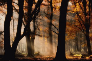 Jan_Paul_Kraaij-Autumn_light