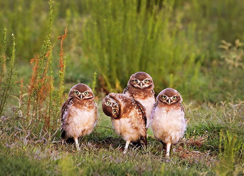 Curious comedy wildlife photography