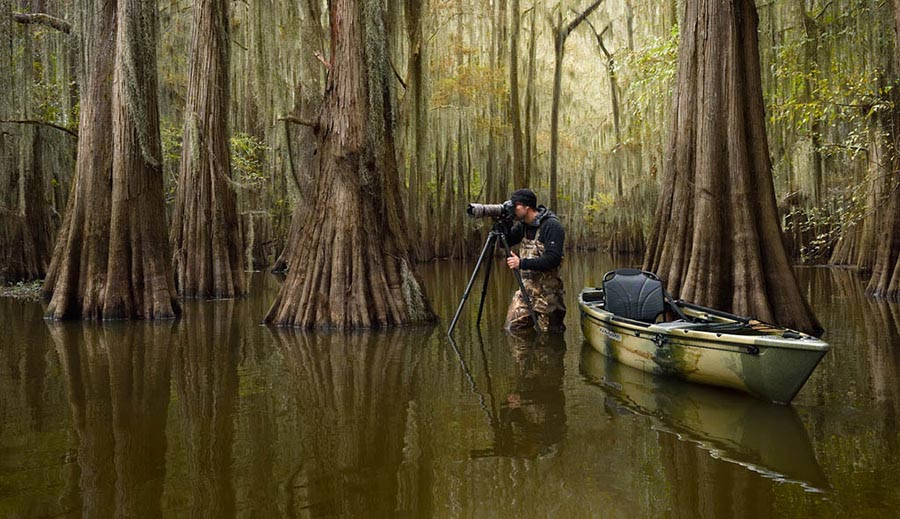 Into The Cypress Swamps