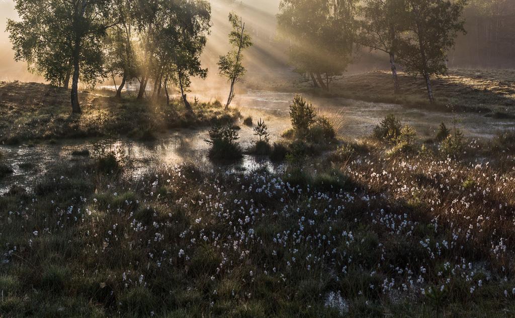 Gebieden fotograferen Natuurfotografie.nl:Teverener Heide