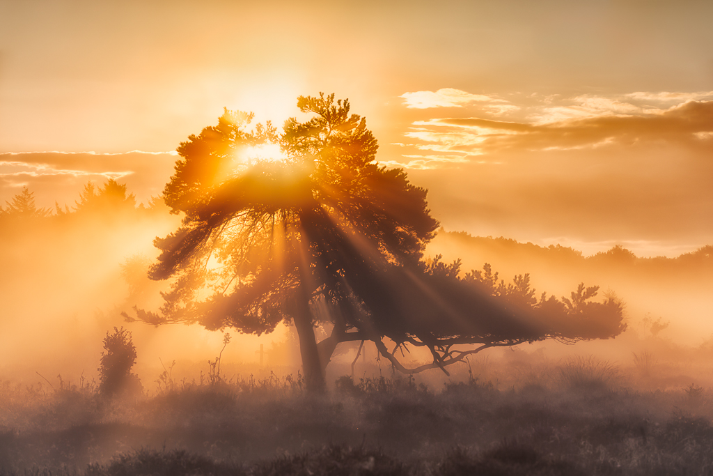 The Tree of Light, Oudemolen, The Netherlands
