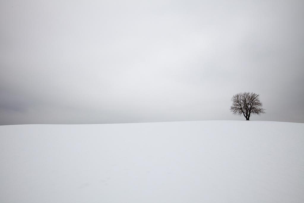 The Tree - Bavaria, germany