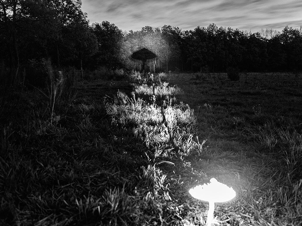 Een strakke bundel van licht maakt de foto mogelijk.