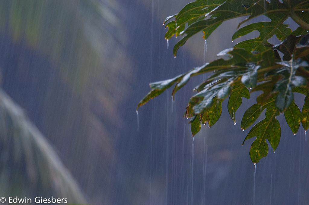 regen vocht costa rica