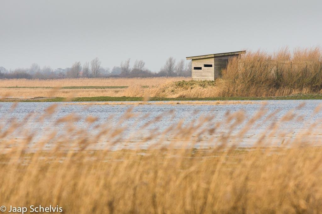 Vogelkijkhut, Bird hide