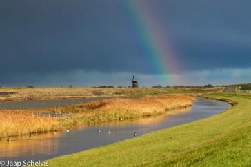 Regenboog; Rainbow