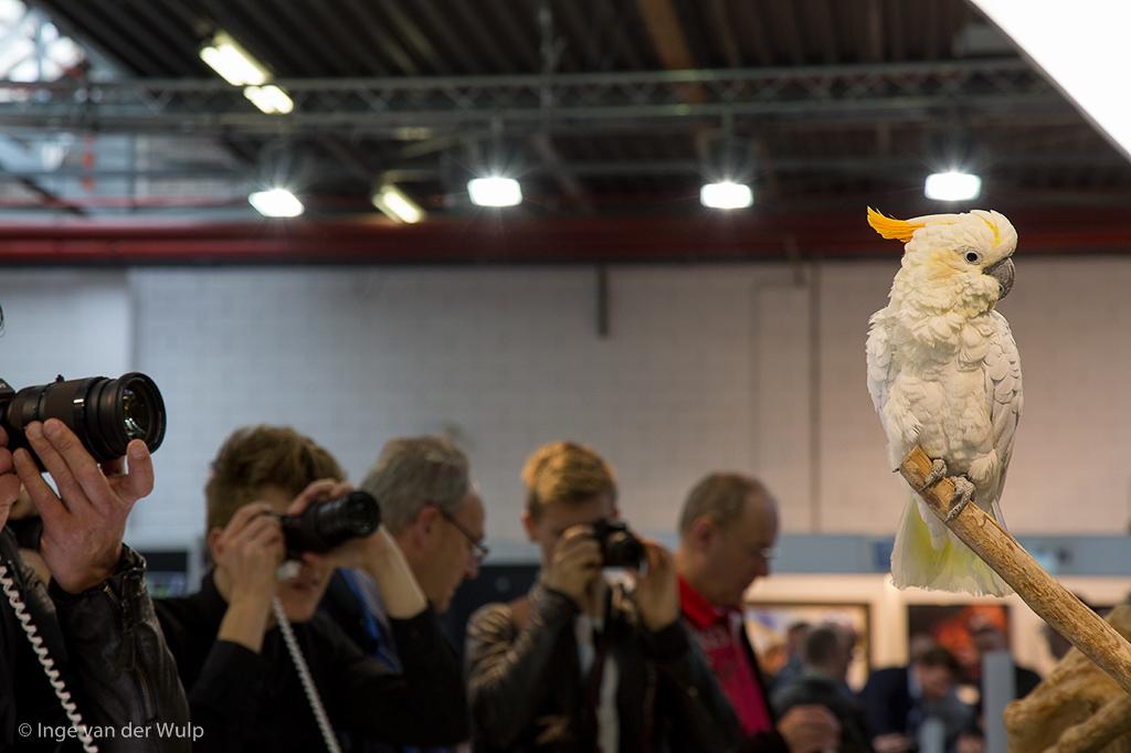professional imaging beurs, vogel