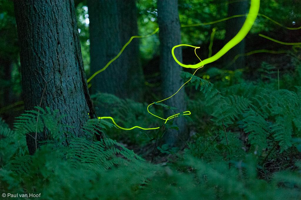 Sporen van vuurvliegjes in het bos