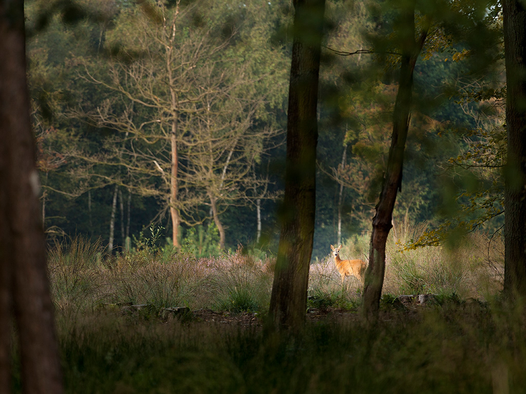 Fotografeer deze week eens… dieren klein in hun omgeving