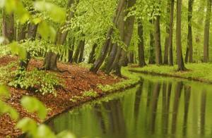 Landgoedbos. Deze foto is gemaakt tijdens een regenbui in een parkbos op een landgoed. Regen verzadigt kleur.