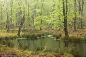 Eindeloos lang ronddwalen en in alle rust genieten van al het  natuurschoon dat je op je pad tegen komt. - Fotograaf: Els Branderhorst