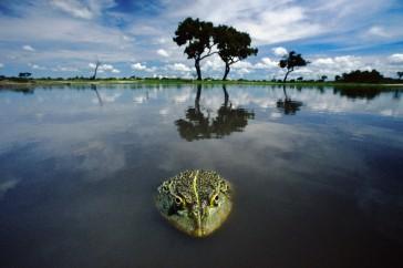 Frans_Lanting-Okavango