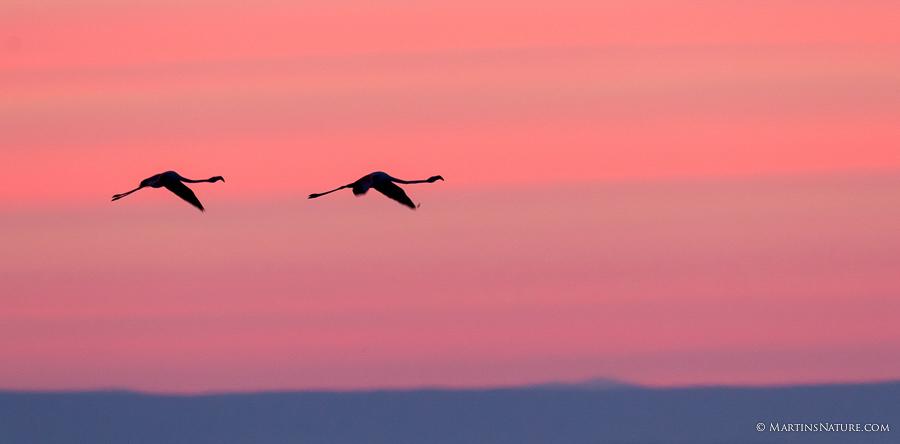 Natuurfotografie.nl april 2015 - vogels in tegenlicht ©Martin Steenhaut-1450
