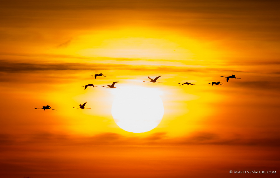 Natuurfotografie.nl april 2015 - vogels in tegenlicht ©Martin Steenhaut-1545
