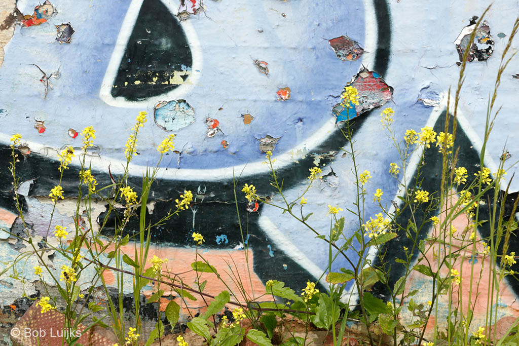 Bloemen zijn overal te vinden.