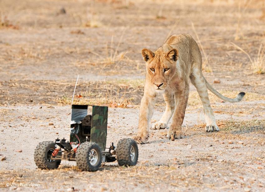 Camerawagen + leeuwin