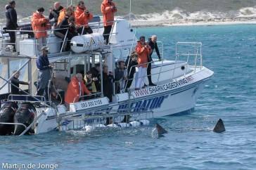 Kooiduiken bij haaien in Zuid Afrika.