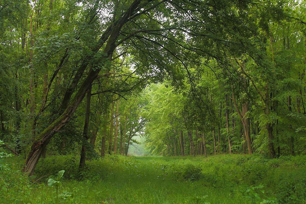 Gebieden fotograferen Natuurfotografie.nl:Larserbos