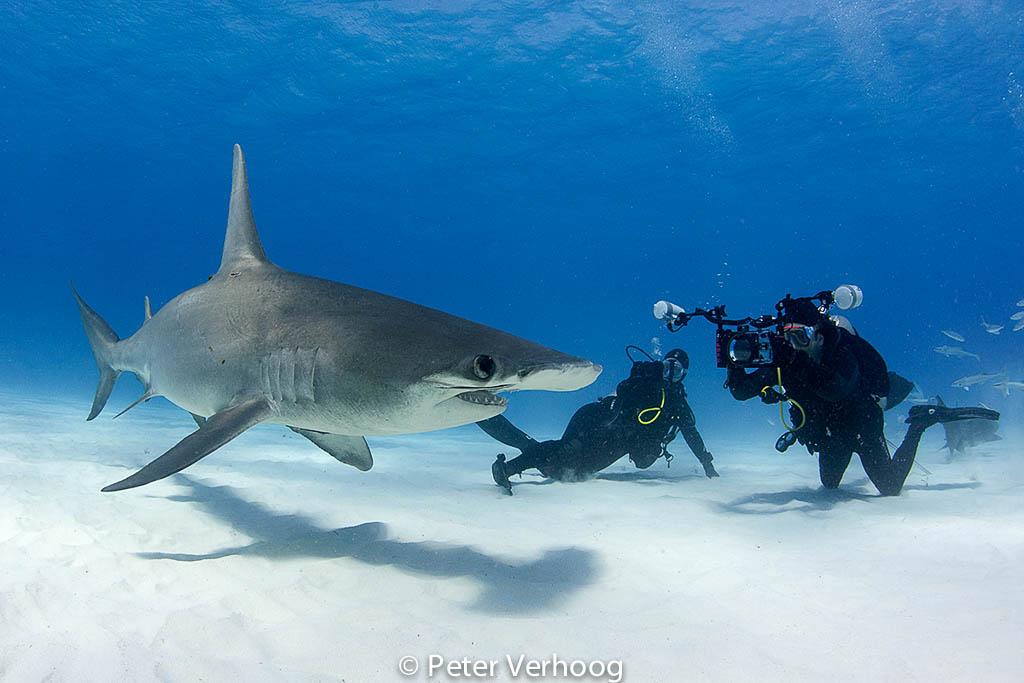 De ergste verstoring van het beeld kun je veroorzaken door het opwervelen van prachtig wit zand – soms doe je dat zelf, maar  je duikbuddy's kunnen er vaak ook wat van.