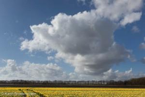 Een wolkenstraat van stapelwolken boven het gele tulpenveld.