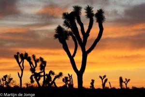 Zonsondergang in Joshua Tree National Park, USA 2015