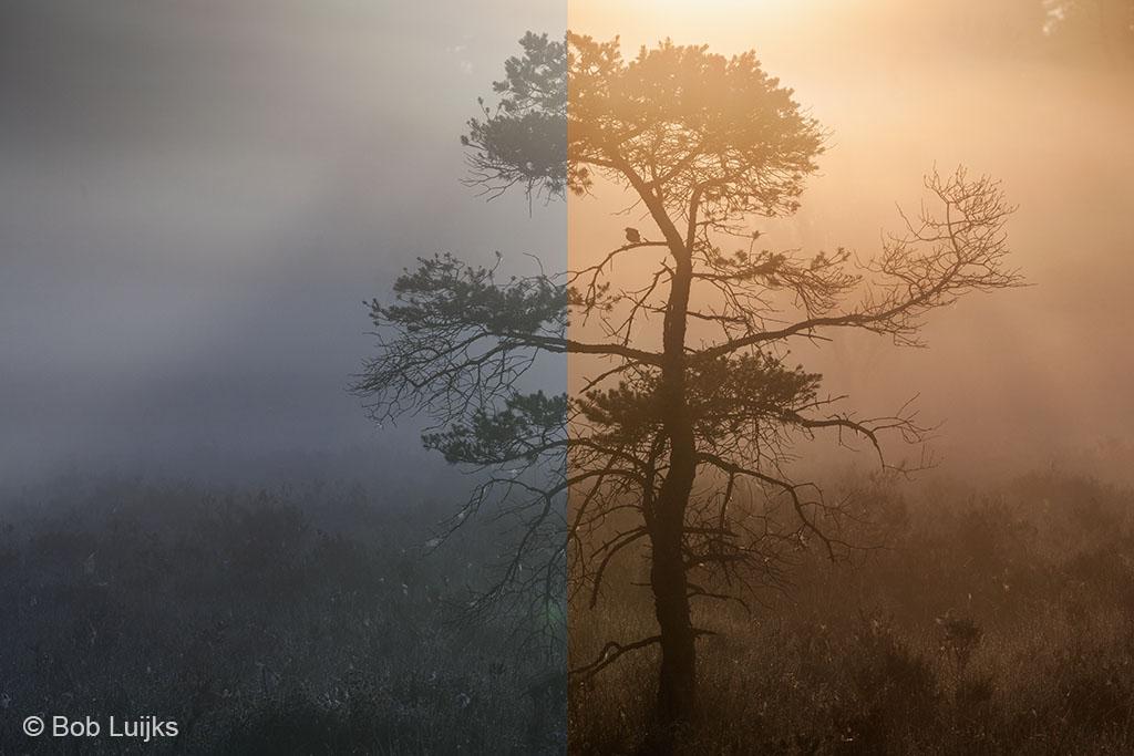 De automatische witbalans heeft het moeite met de kleurexplosie van een zonsopkomst. Met de nabewerking komt de werkelijke sfeer weer terug.