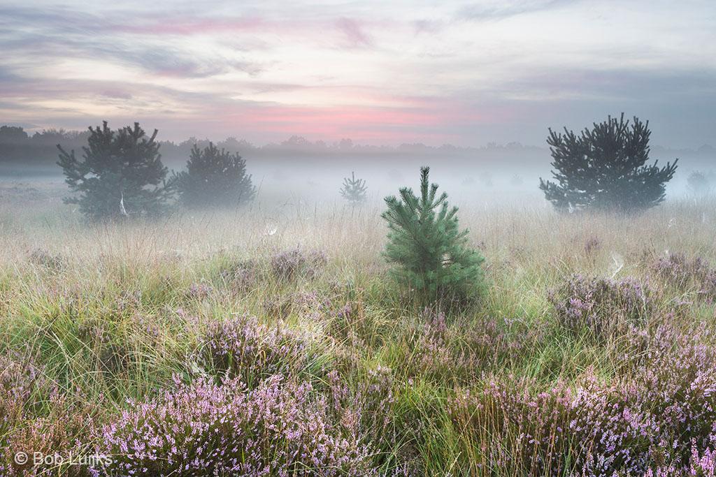 Pasteltinten en mist, de reden waarom ik kies voor de ochtend.