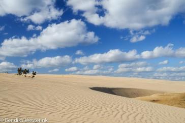 Hoge Veluwe; Sand structurest on National Park the Hoge Veluwe