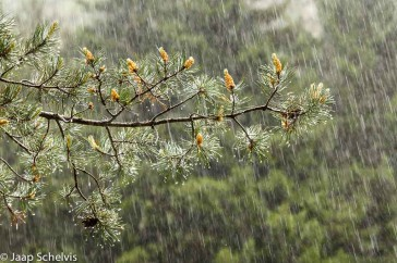 Stortregen; Heavy rain