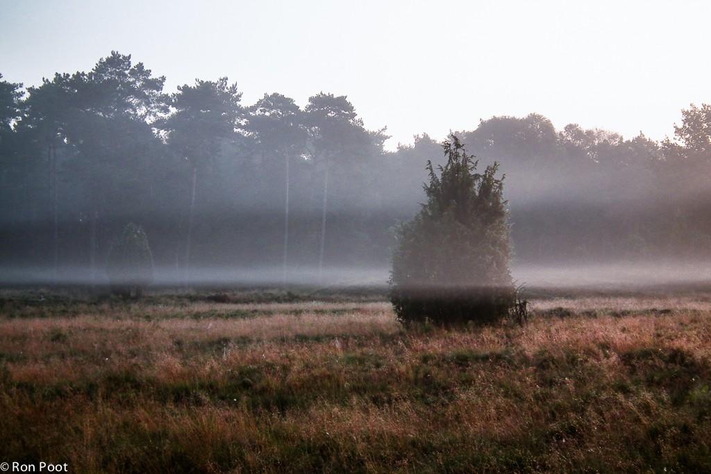 Nevelige ochtend op het Beerzerveld.