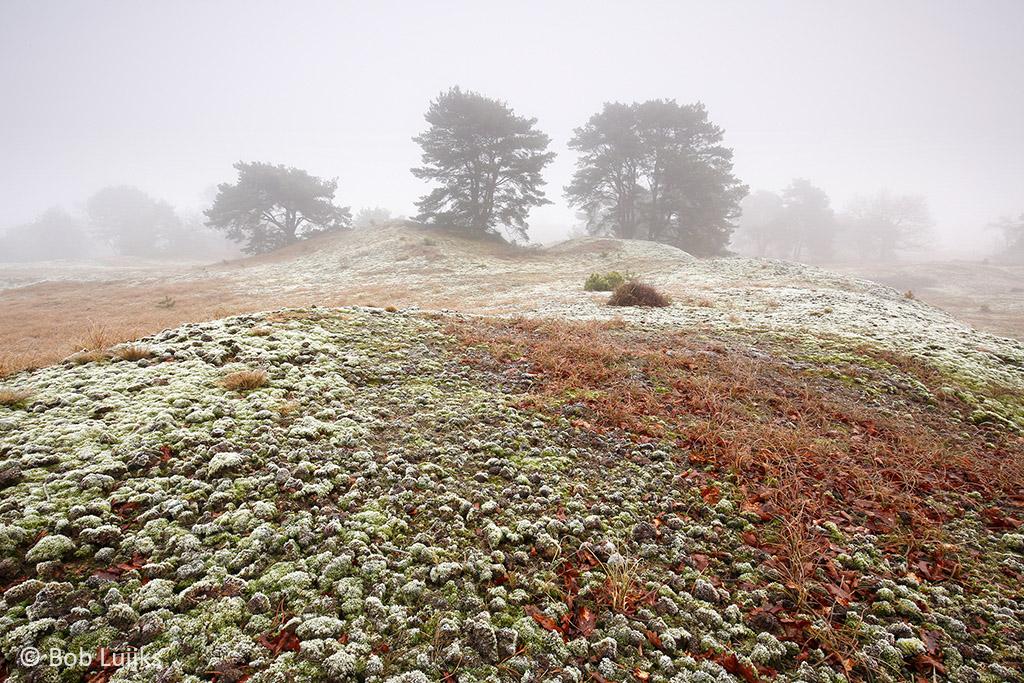 Mossen in de voorgrond zorgen voor sfeer.