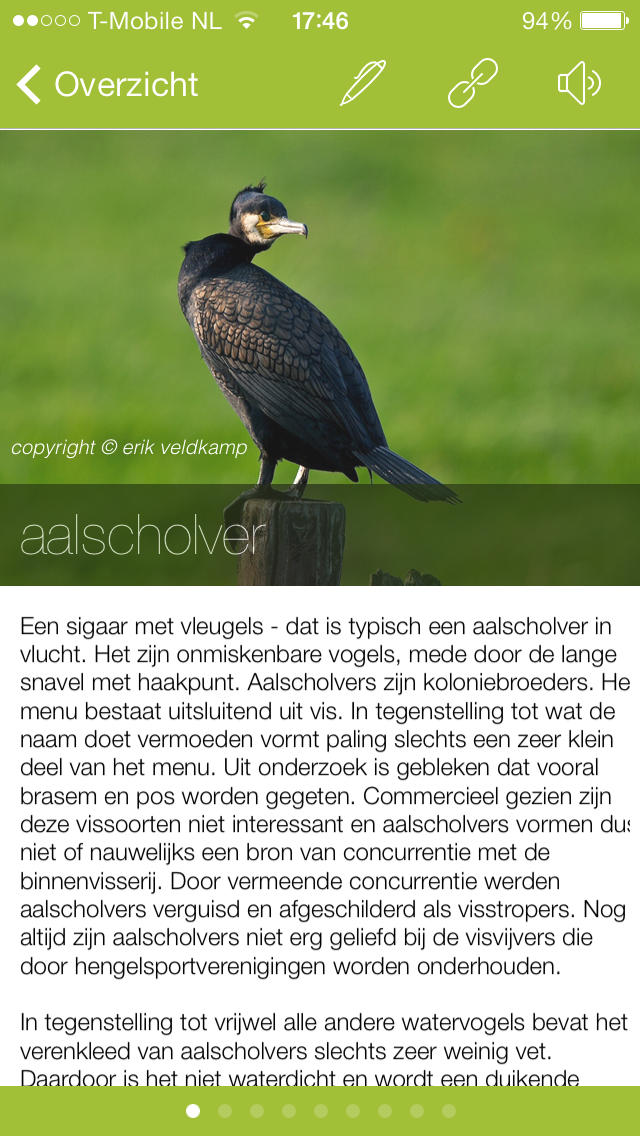 vogelsinnederland