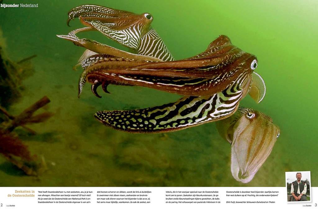 zeekat sepia naarbuiten
