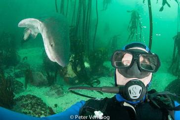 Haaiengedrag1_PeterVerhoog