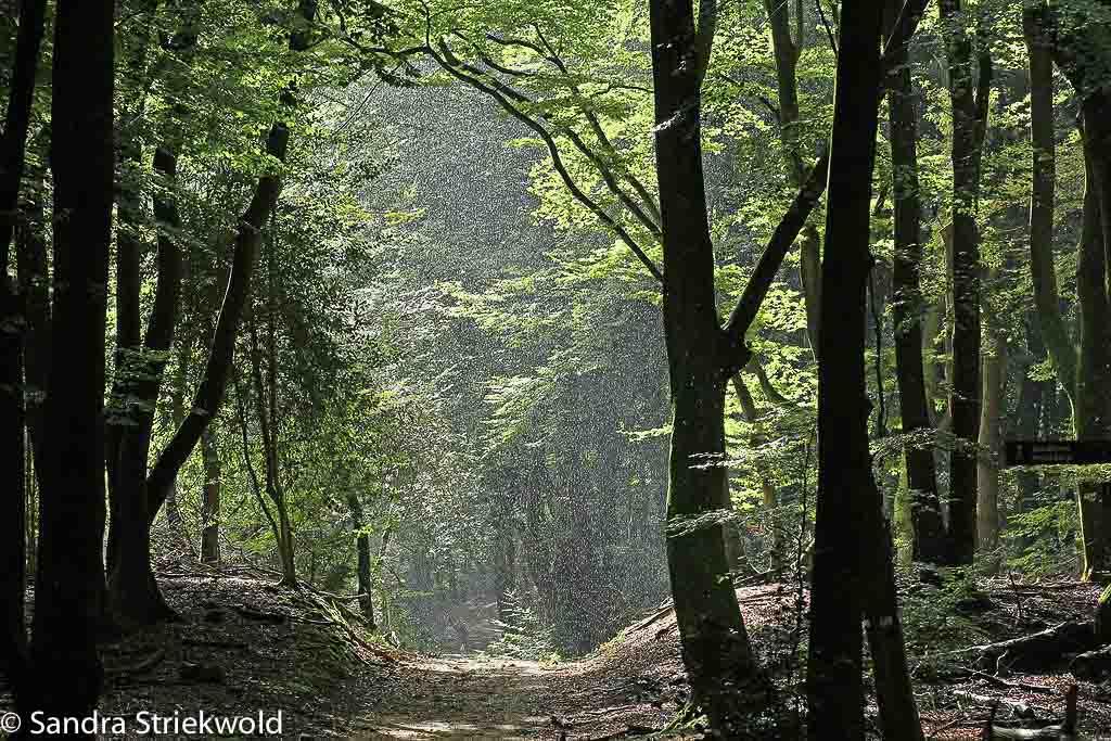 Regen en zonneschijn in het Speulder en Sprielderbos.