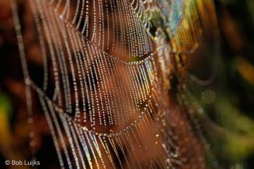 Regenboog in spinnenweb.