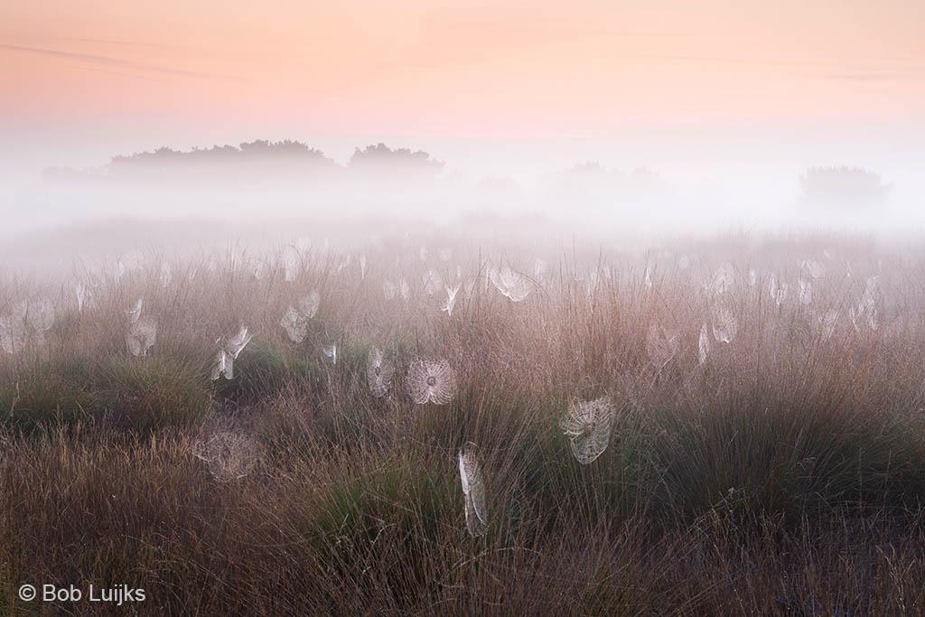 Spinnenwebben als sfeermakers in het landschap.