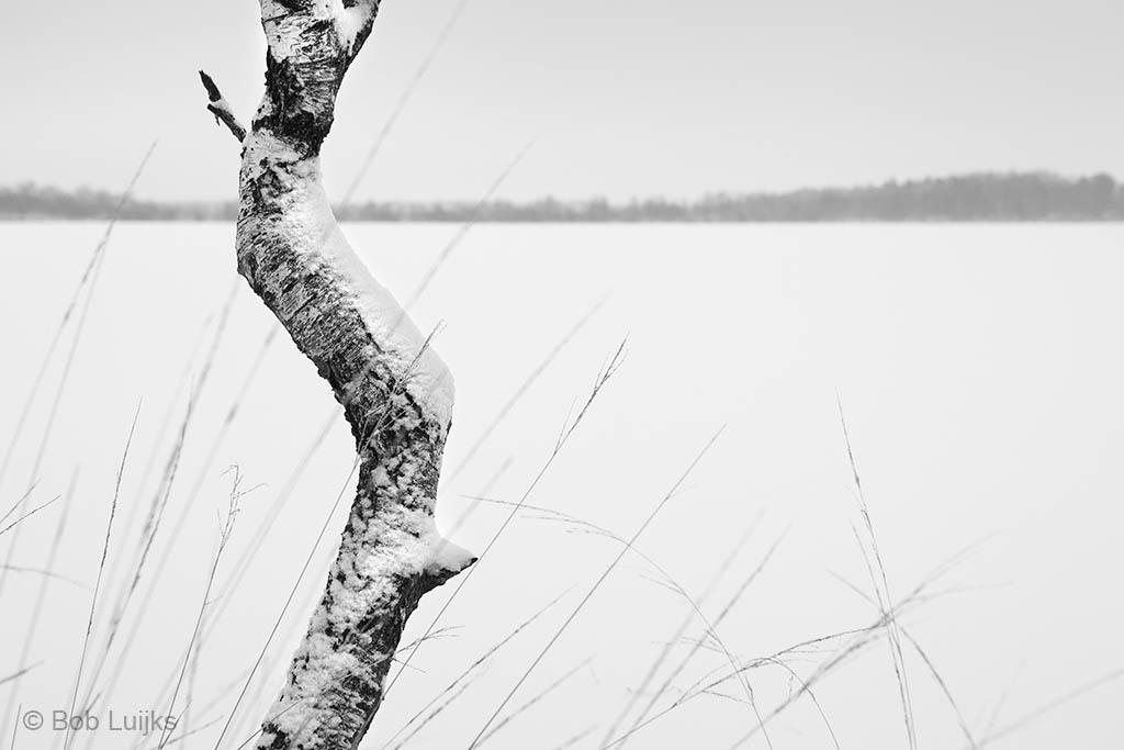 Voor mij de ideale omstandigheden: winter, grauw weer en sneeuw.