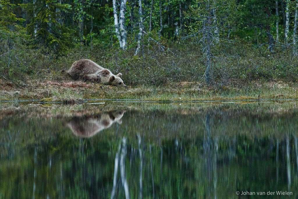 Een beer alleen is voor mij niet meer genoeg, maar reflecterend in het water waarbij dit jonge dier ook nog speels over de grond kruipt... dat is kick!