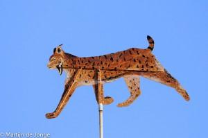 Iberische Lynx als windwijzer.