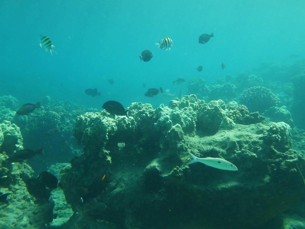 De kleurrijke onderwaterwereld staat centraal in de AquaHortus.