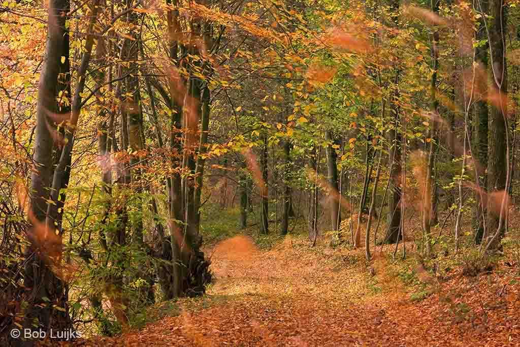 De blaadjes vallen massaal, nog even, en de herfst is voorbij.