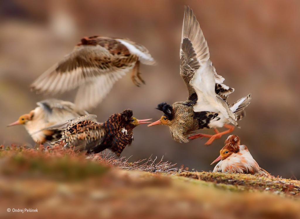 Winnaar 'Young Wildlife Photographer of the Year'.