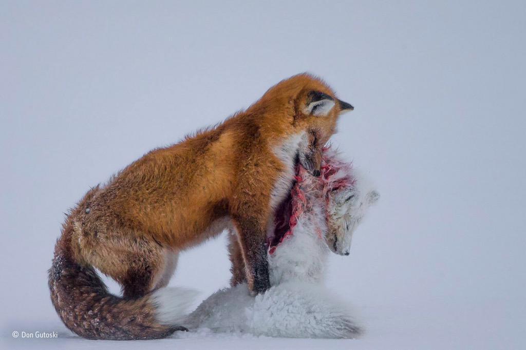 Winnende foto 'Mammals'.