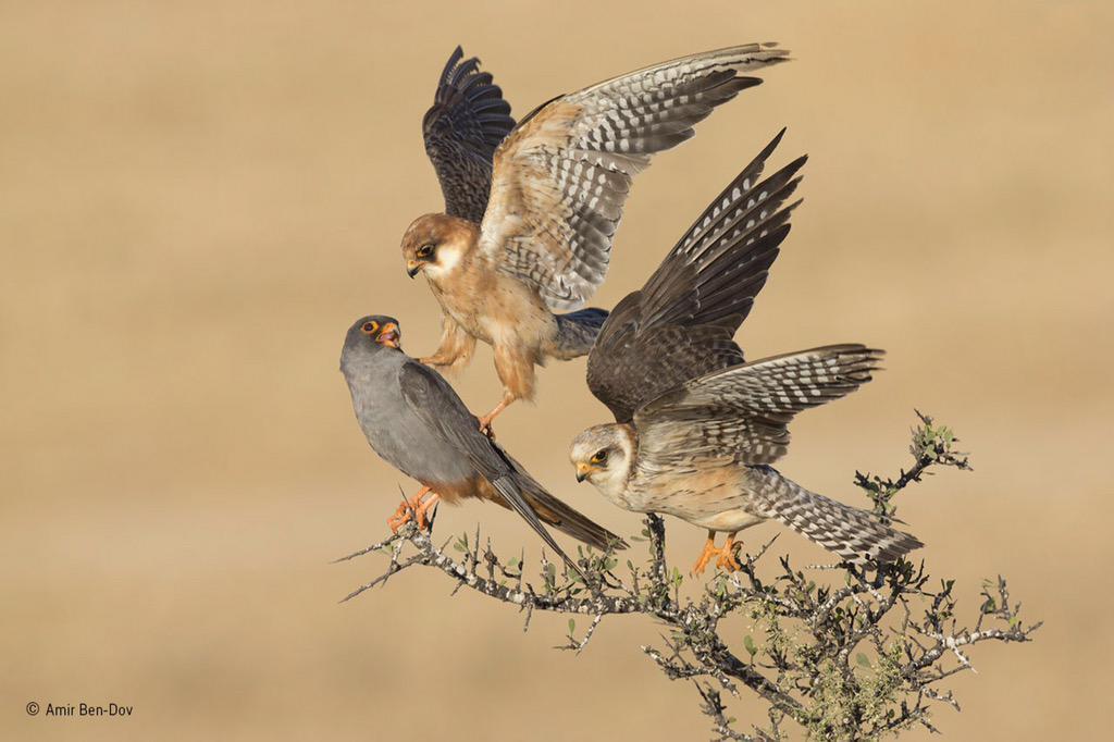 Winnende foto 'Birds'.