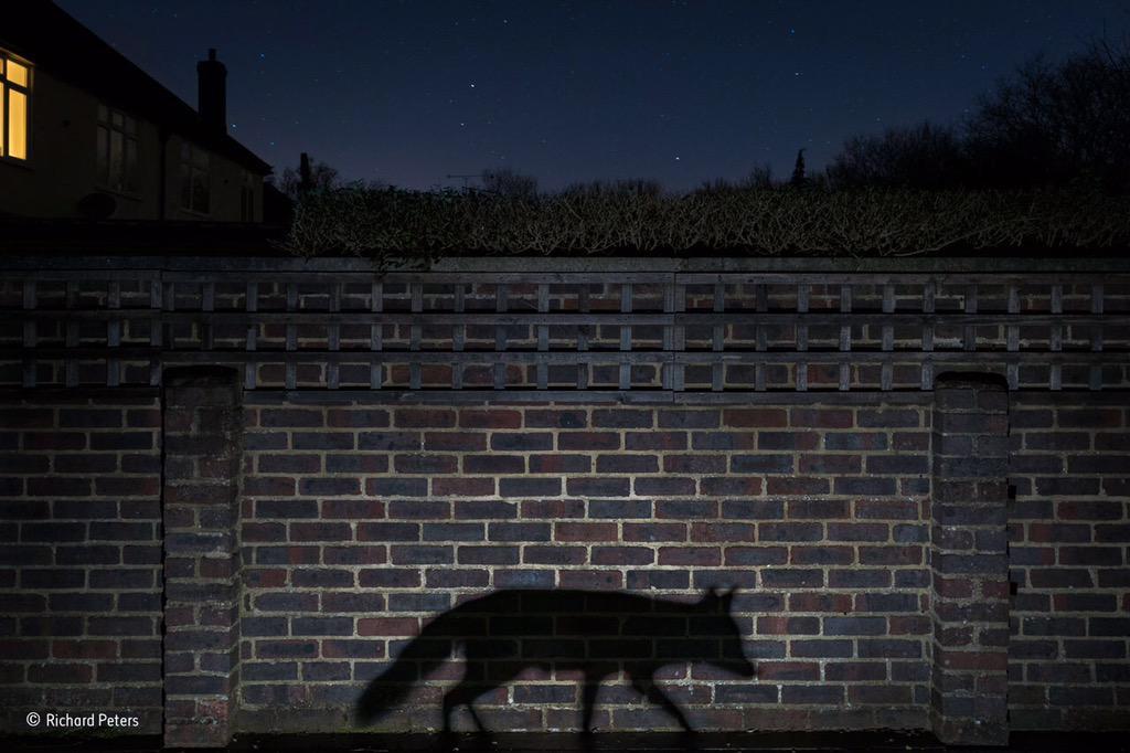 Winnende foto 'Urban Wildlife'.