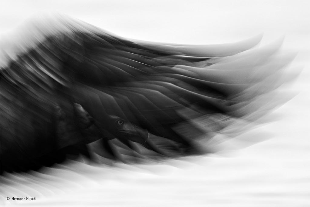 Winnende foto 'Black and White'.