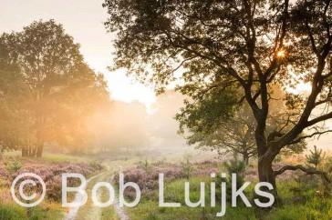 Bob_Luijks-naam_foto