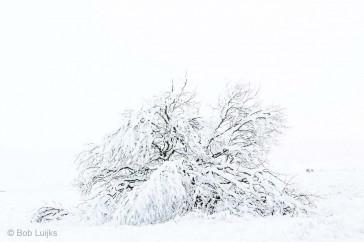 Bob_Luijks-winterklaar