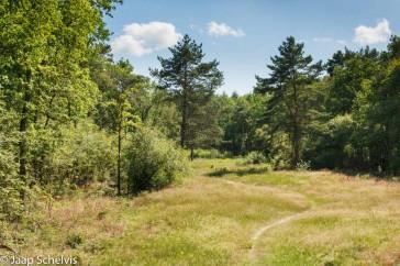Kenmerkend voor het Noordlaarderbos is de afwisseling van loof- en naaldbomen. Ook zijn er tussen de bospercelen veel open plekken.